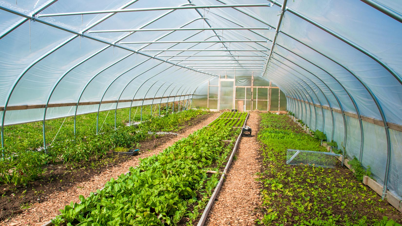 A high tunnel for growing vegetables.
