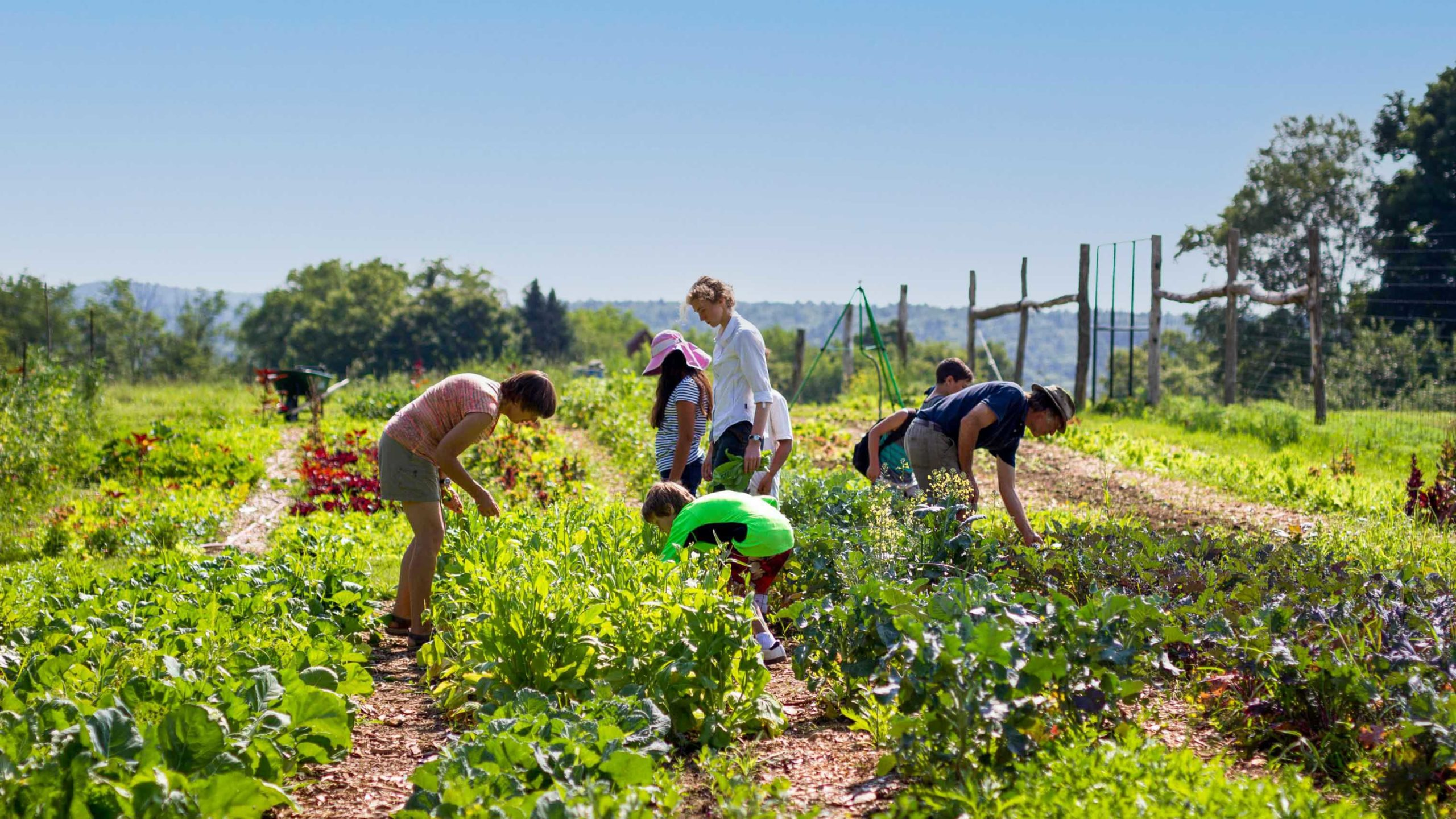 Campers working in the farm garden.