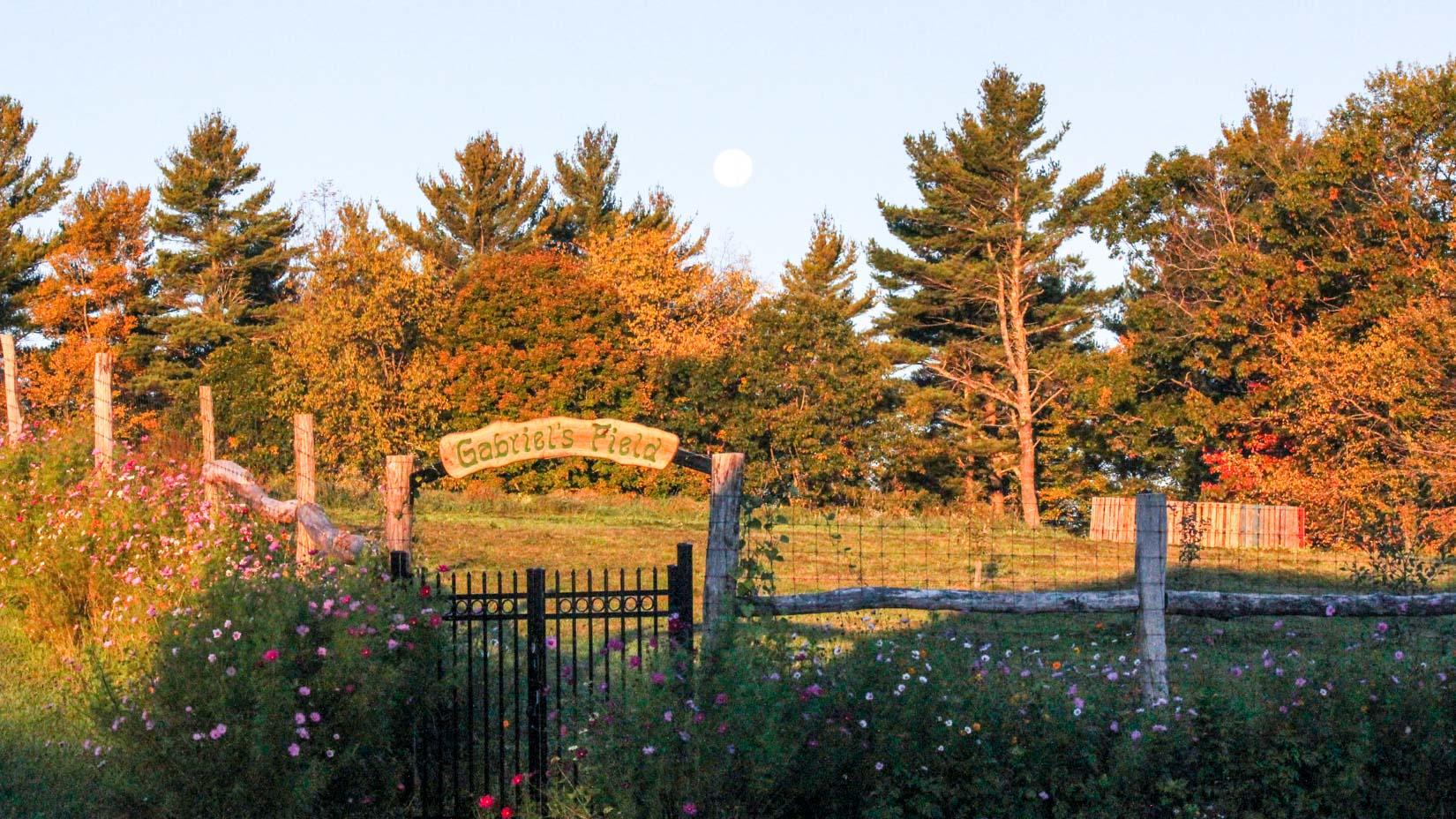 Gabriel's field at sunset, a garden at camp glen brook.