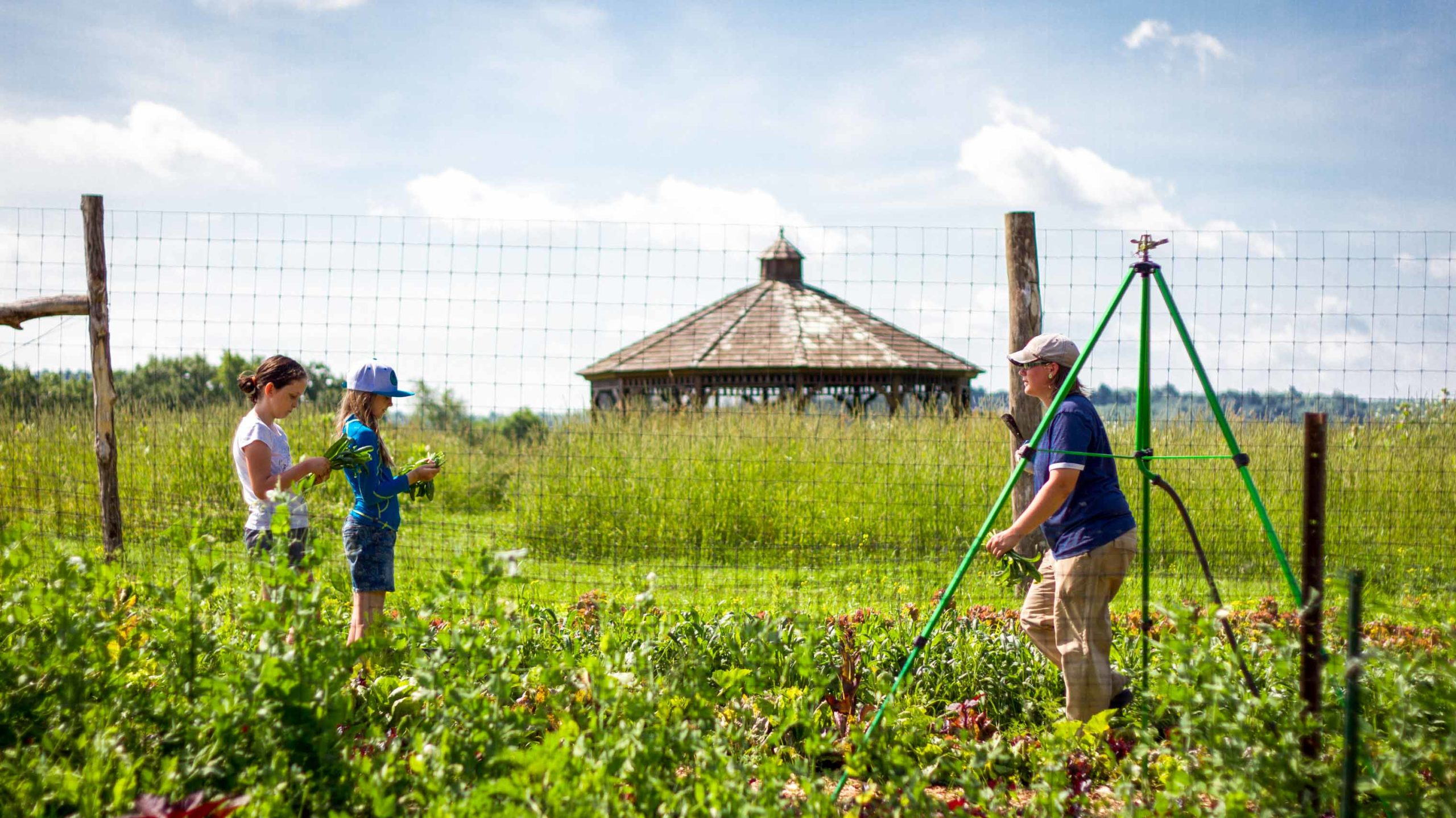 Campers working on farming in the garden