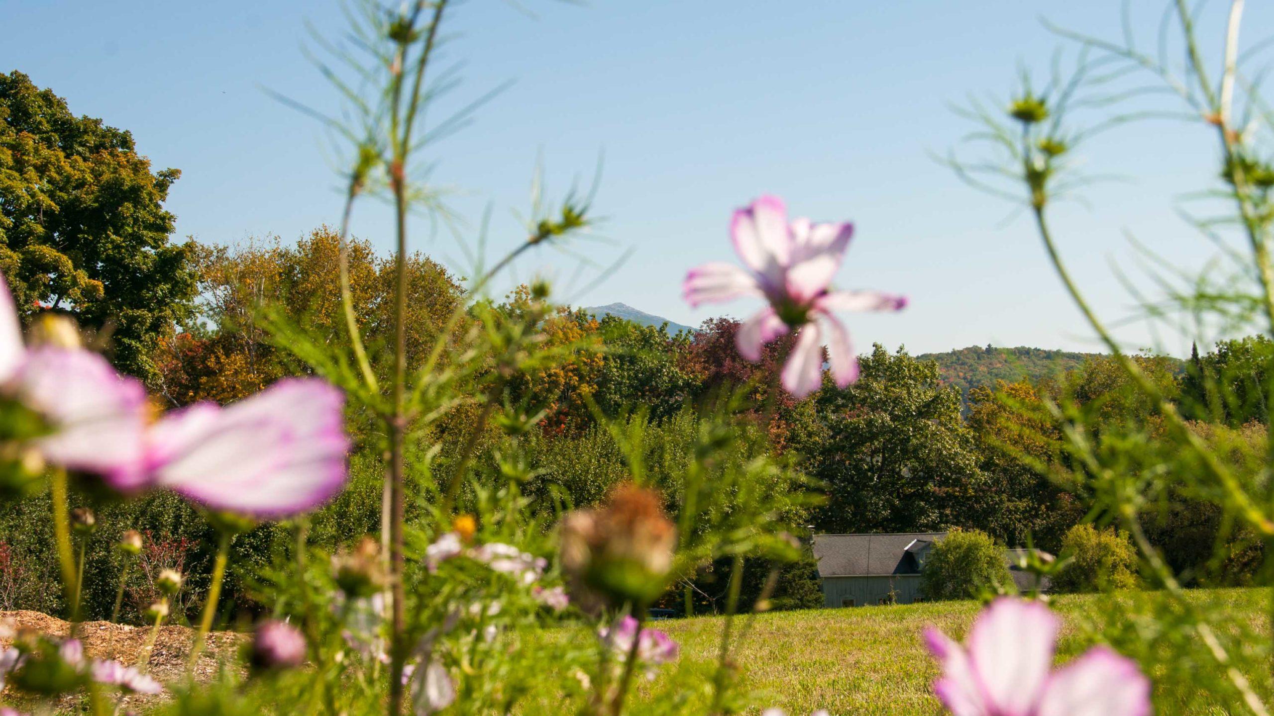 Pink flowers in the camp glen brook field.